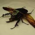 cyber_insekt